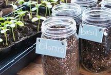 Plants & Garden / Plants, flowers, garden, herbs