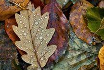 \\ occasions | autumn \\ /