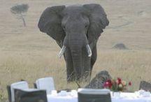 Fine dining on safari