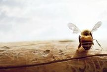 Mealach Cir-Mheala / Sweet Honeycomb / by Kimberly Lawday