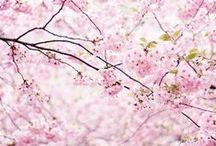 >>> f l o w e r s <<< / by petal floral design