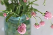 \\\ home & garden | house plants & flowers \\\