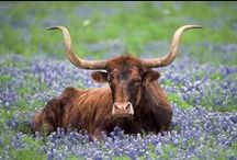TEXAS / Houston, San Antonio, Dallas, Austin Ft. Worth, El Paso and all small towns around. Museums, Churches, Attractions, Restaurants,Recipes and all things Texas / by Marilyn Beavers