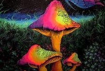 Mushroom Pix