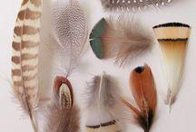 naturalis historia / natural history cataloging inspiration