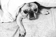 PUG! / by This Pug Life