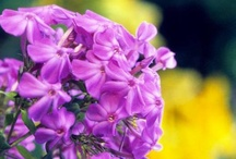 Garden / Gardening, outdoor furniture and landscaping ideas