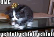 Funny Cat quotes / Life without Cat Hair is not worth living!
