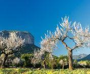 Winter in Mallorca