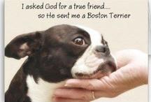 Love Boston Terriers / by Brenda Shields