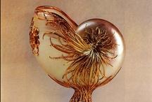 Art: Shells / by Lynne Wedeen