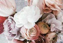 blooms. / flowers / by Kat Mansur