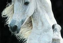 Horses / This collection features some of the horses you can adopt from Horseclicks.com and some beautiful images from around the web. If you want your horse-for-sale to appear here, please call (786) 433-7120 to sign up.