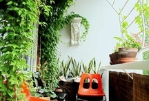 Urban Garden Ideas