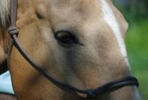 Horse Heath and Wellness / Keeping your horse healthy and happy is a big job. We want to make it easier with these expert tips and tricks from the pros.