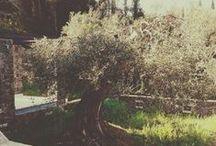 """Villa Kallikori"",Corfu Island,Greece / Our project almost finished...."