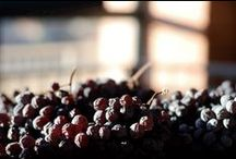 Appassimento / The method of appassimento (drying grapes) to produce Amarone and other wines