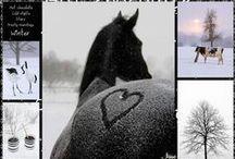 Winter in Black/White