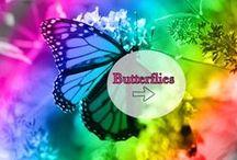 Butterfly Boards