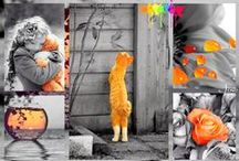 ColorSplash Orange