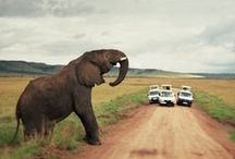 Elephants / They INSTANTLY put me in a better mood!! / by Ailee Harman