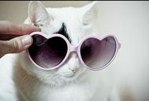 Cats in Sunglasses / Just cats in sunglasses.  / by Logo TV
