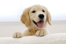 Doggy !