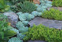 Gardens / by Ailee Harman