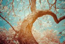 trees / Tree Lovin / by Zane Emily