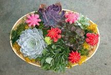 In House Garden Design / Terrariums, succulent dish gardens, foliage planters and orchid gardens.