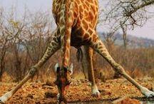 Safari camp ideas