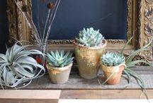 Succulent and Cactus Love