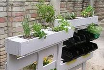 lovin' gardening / how does your garden grow? Tips, tricks, and ideas for growing your own food and keeping garden pests under control naturally   Gardening ideas   Food garden