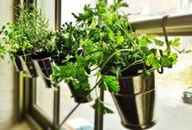lovin' indoor gardens / how do your indoor plants grow? Tips, tricks, and ideas for gardening inside your home PLUS preserving fresh food from your garden (or the store). Live healthy!