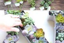Beautiful Succulent DIYs