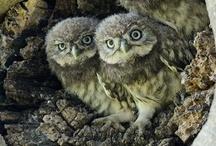 owls,hawkes & other raptors / by Inglesa Maserati