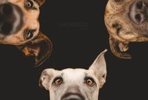animaL / by Tracy H