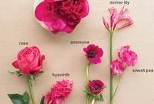 flowers / by Jenny Kleven