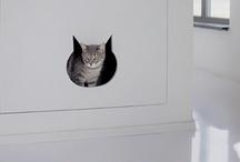 Schön für Katzen