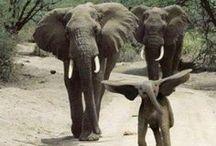 Elephants / by Indiri @ Turning Stones