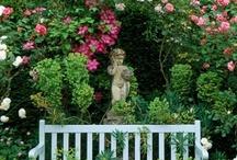 ♥ Garden Thyme ♥ / by Cynthia Rose