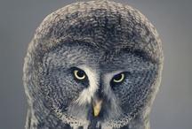OWL_Baykus / by Bora Çıracı