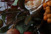 fall photo shoot / by Sarah Blasi