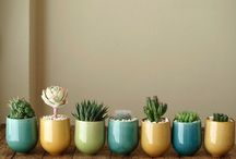 succulents and gardening
