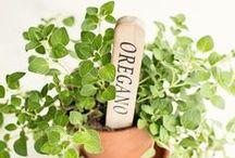⁂ Oregano ⁂ / The warm, balsamic and aromatic flavor of oregano