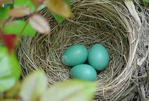 Hues of Blue (Robin's egg blue) or Tiffany Blue / by Tiffany Horensky