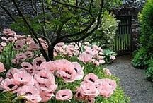 garden stuff / by Jonna Vejrup