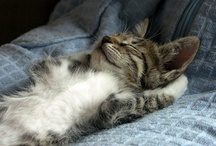 I Love Animals! / Just cute pics...mostly cats....that made me smile!