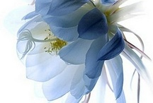 Cheiro de flores | Flowers / by Evelyn Muller