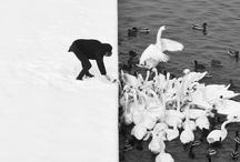 olhares em preto e branco / by Evelyn Muller